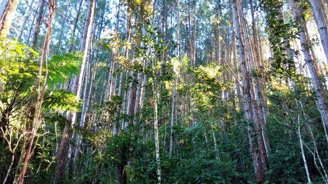 Sítio com área de 259.923,44m², com reflorestamento - Foto 14