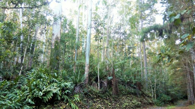 Sítio com área de 259.923,44m², com reflorestamento - Foto 11