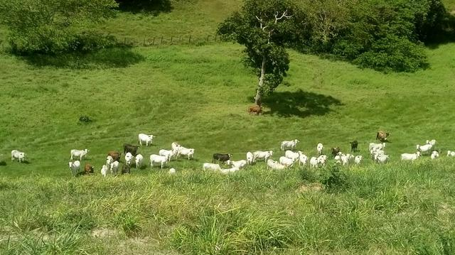 Fazenda em São José da Coroa Grande - Foto 6