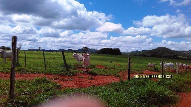 Fazenda de 13 alq. em Trindade - Foto 8