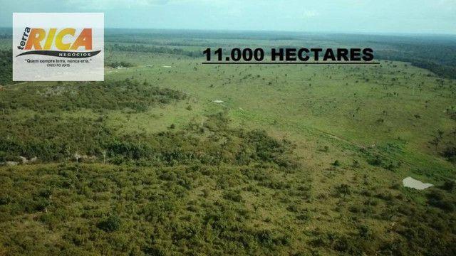 Fazenda com 11.000 Hectares à venda, na Zona Rural - Novo Aripuanã/AM