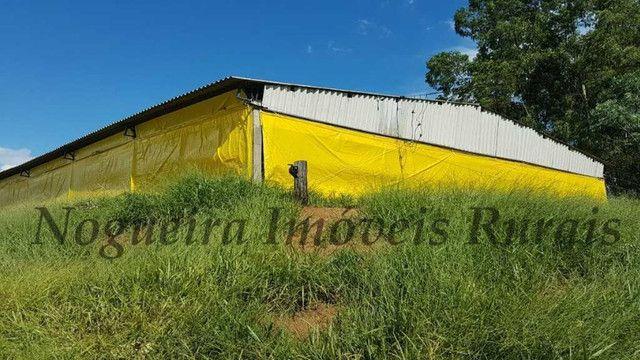 Sítio com granja, capacidade para 30.000 frangos (Nogueira Imóveis Rurais) - Foto 5