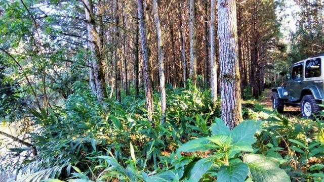 Sítio com área de 259.923,44m², com reflorestamento - Foto 18