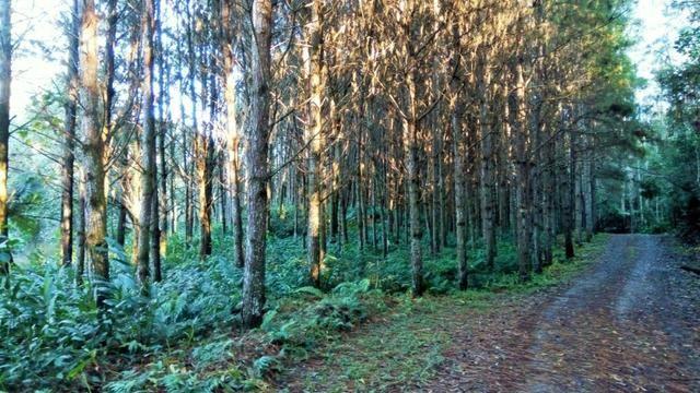 Sítio com área de 259.923,44m², com reflorestamento - Foto 7