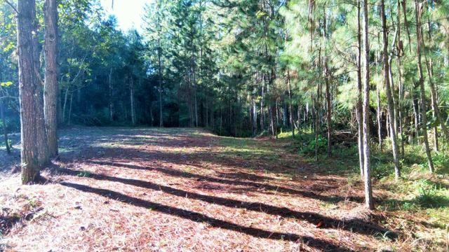 Sítio com área de 259.923,44m², com reflorestamento - Foto 15