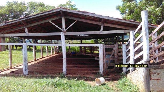 Fazenda de 13 alq. em Trindade - Foto 10