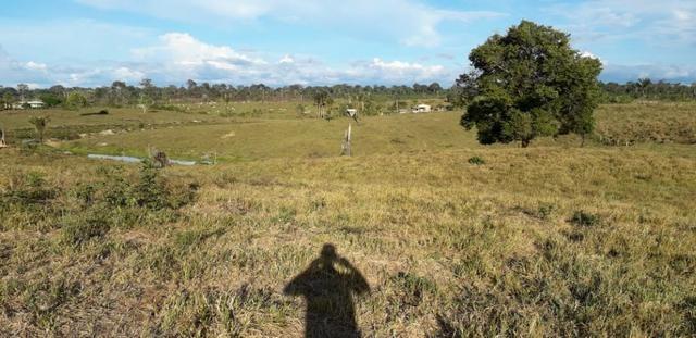 Fazenda em Roraima na BR210 - Caroebe - Foto 9