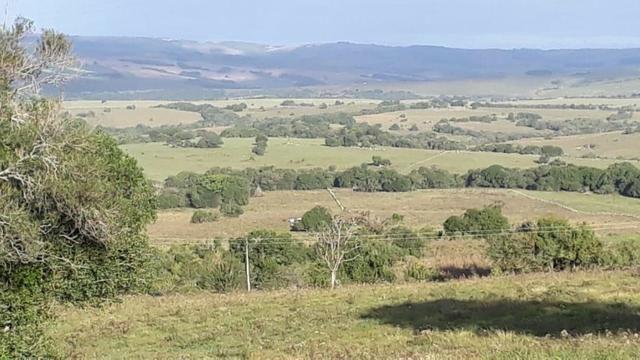 76 hectares para pecuária, Oliveira, Nogueira e Soja