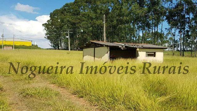 Sítio com granja, capacidade para 30.000 frangos (Nogueira Imóveis Rurais) - Foto 11