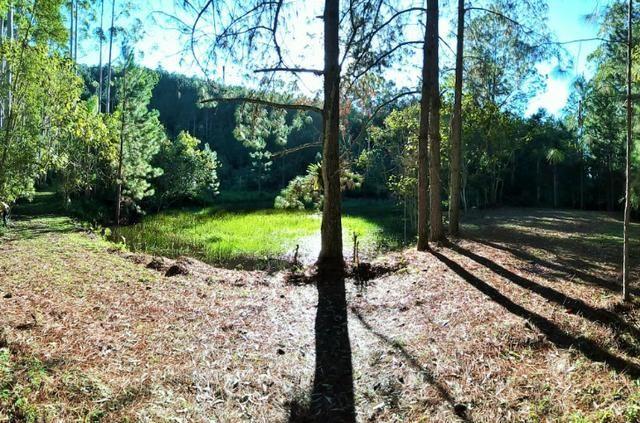 Sítio com área de 259.923,44m², com reflorestamento - Foto 2