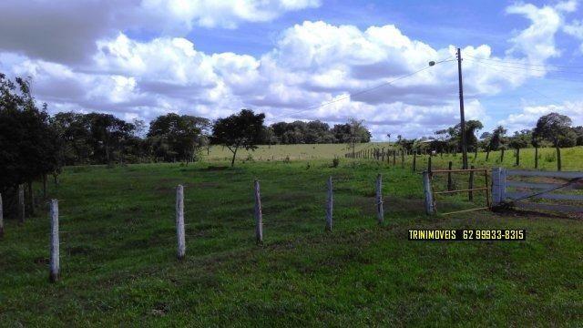 Fazenda de 13 alq. em Trindade - Foto 12
