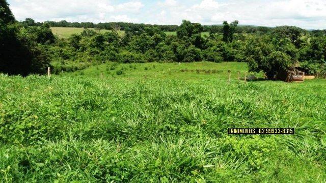 Fazenda de 13 alq. em Trindade - Foto 19