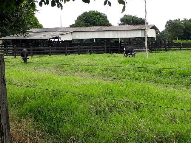 Área para confinamento ou laticínio na comunidade olho dagua na BR 364 a 30 km de Cuiabá - Foto 16