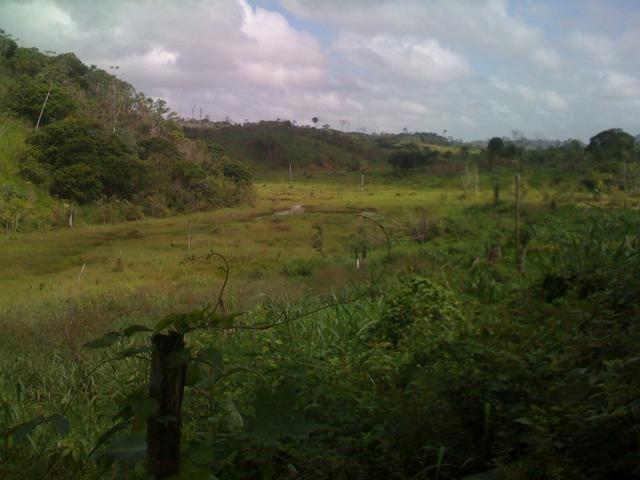 Zé Doca - Maranhão: Vendo Propriedade Rural - Foto 5