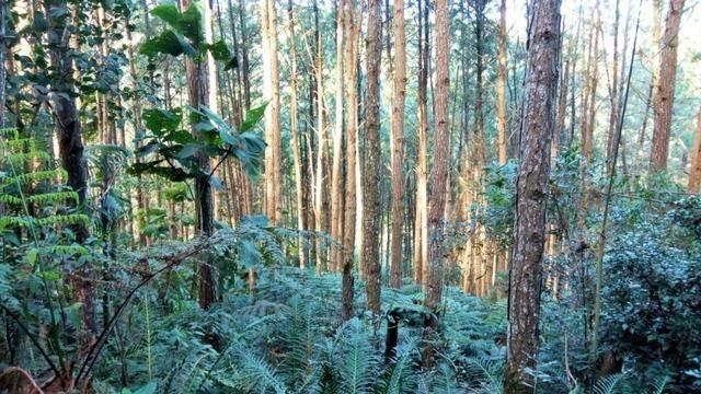 Sítio com área de 259.923,44m², com reflorestamento - Foto 12