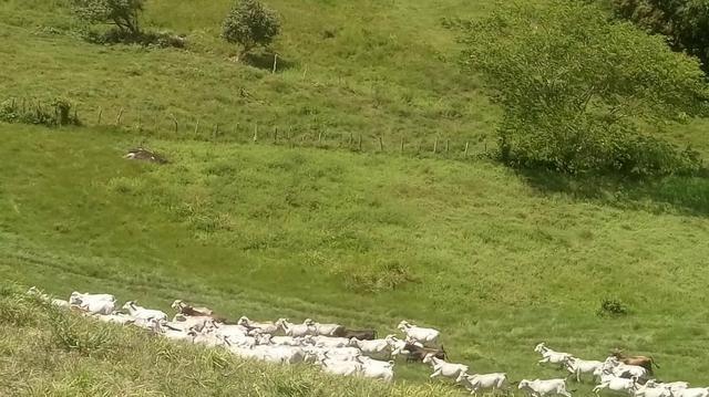 Fazenda em São José da Coroa Grande - Foto 8