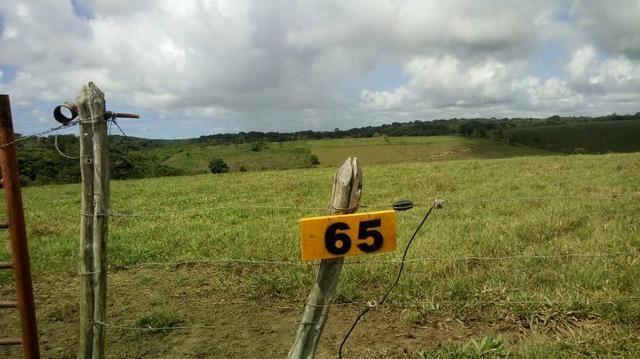 Fazenda em São José da Coroa Grande - Foto 2