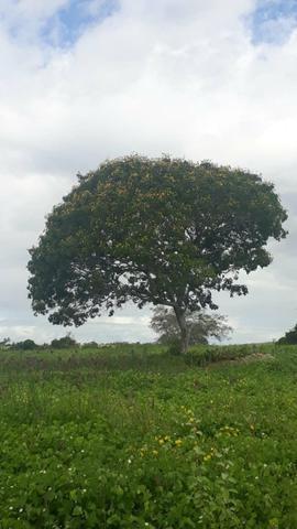 Fazenda Em Lamarão - Foto 3