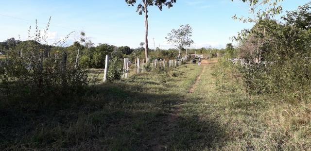 Fazenda em Roraima na BR210 - Caroebe - Foto 5