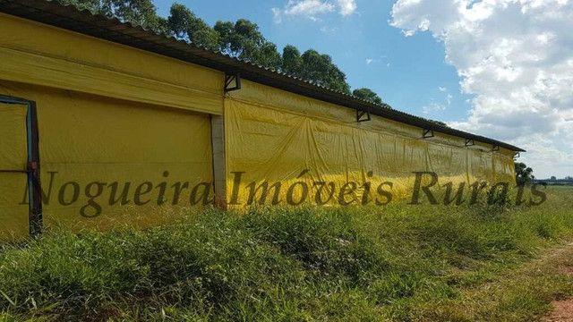 Sítio com granja, capacidade para 30.000 frangos (Nogueira Imóveis Rurais) - Foto 16