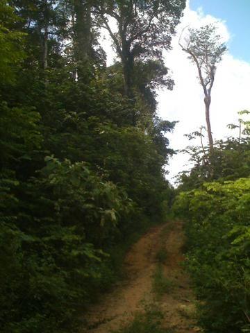 Zé Doca - Maranhão: Vendo Propriedade Rural - Foto 9