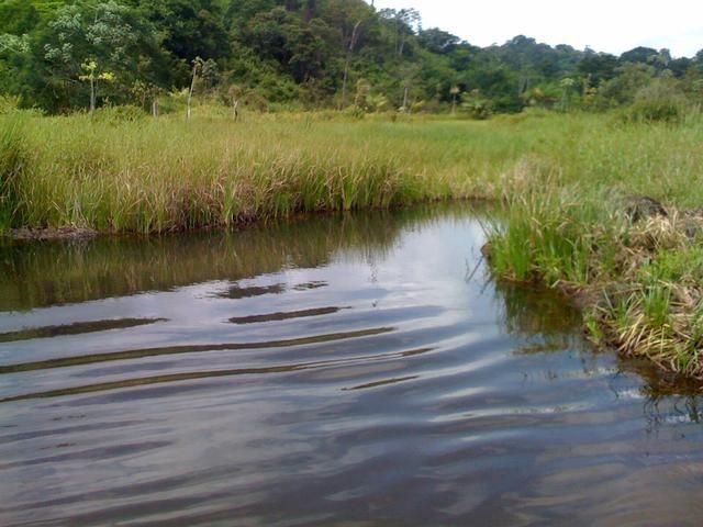 Zé Doca - Maranhão: Vendo Propriedade Rural - Foto 7