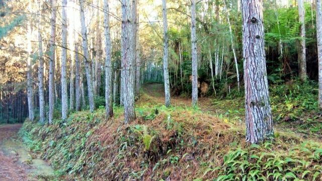 Sítio com área de 259.923,44m², com reflorestamento - Foto 10