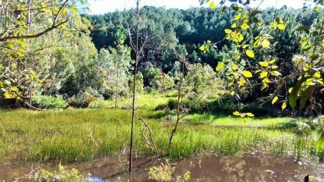 Sítio com área de 259.923,44m², com reflorestamento - Foto 5