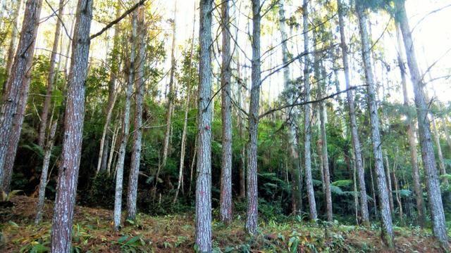 Sítio com área de 259.923,44m², com reflorestamento - Foto 16