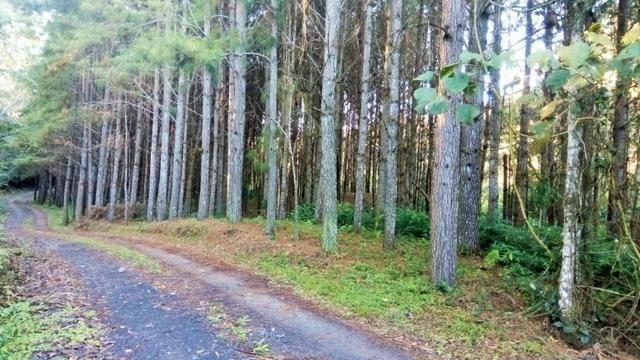 Sítio com área de 259.923,44m², com reflorestamento - Foto 4