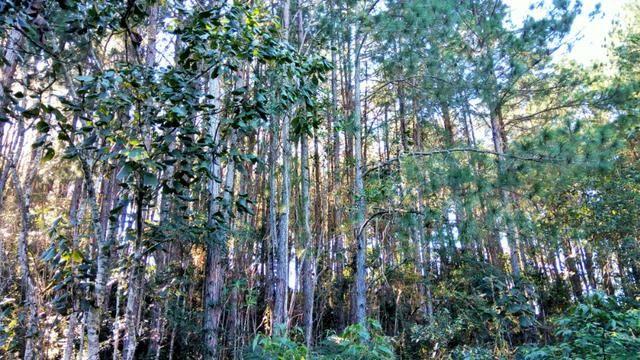 Sítio com área de 259.923,44m², com reflorestamento - Foto 20