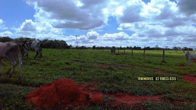 Fazenda de 13 alq. em Trindade - Foto 4