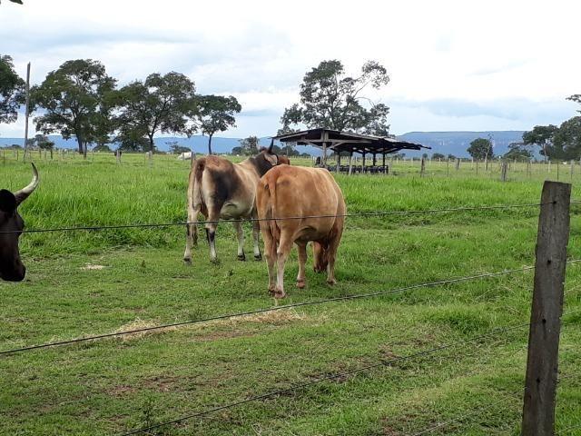 Área para confinamento ou laticínio na comunidade olho dagua na BR 364 a 30 km de Cuiabá - Foto 14