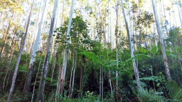 Sítio com área de 259.923,44m², com reflorestamento - Foto 6