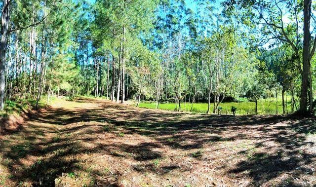 Sítio com área de 259.923,44m², com reflorestamento - Foto 3