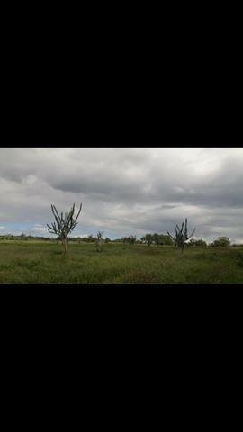 Fazenda Em Lamarão - Foto 2