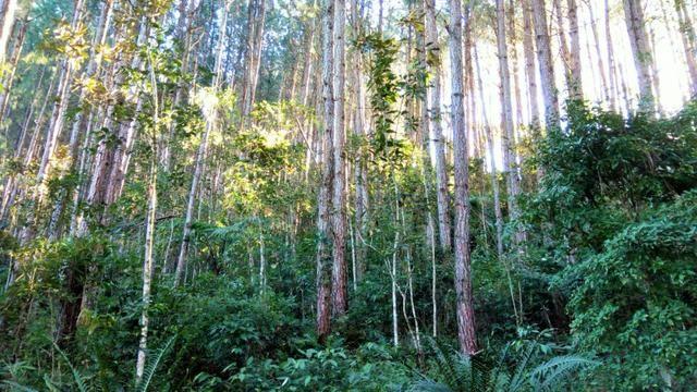 Sítio com área de 259.923,44m², com reflorestamento - Foto 13