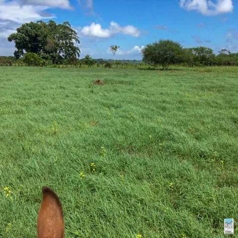 Excelente Fazenda em Amélia Rodrigues - Bahia - Foto 6