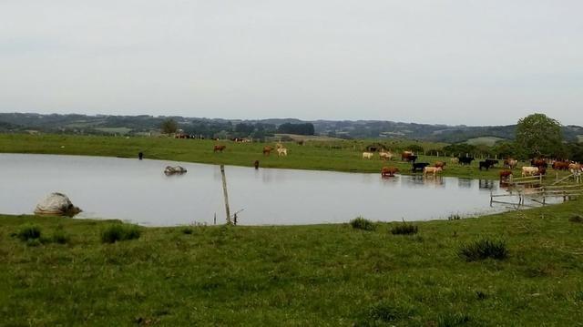 76 hectares para pecuária, Oliveira, Nogueira e Soja - Foto 2