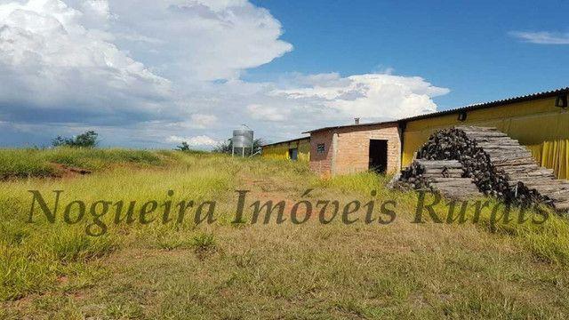 Sítio com granja, capacidade para 30.000 frangos (Nogueira Imóveis Rurais) - Foto 6