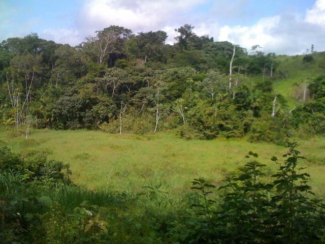 Zé Doca - Maranhão: Vendo Propriedade Rural - Foto 4