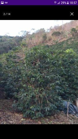 Terreno em Santa Rita de Minas - Foto 4