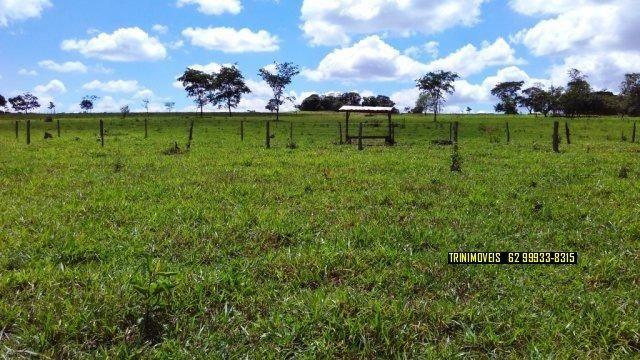 Fazenda de 13 alq. em Trindade