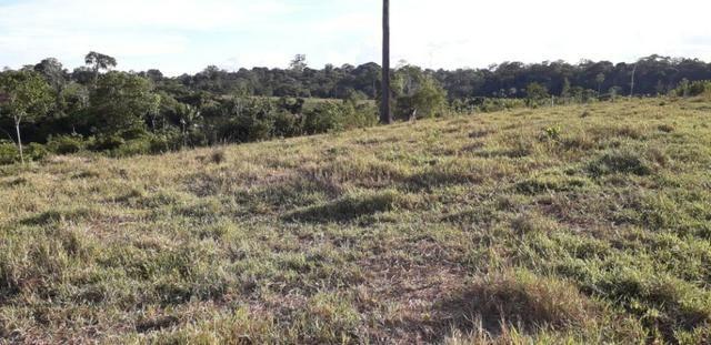 Fazenda em Roraima na BR210 - Caroebe - Foto 12