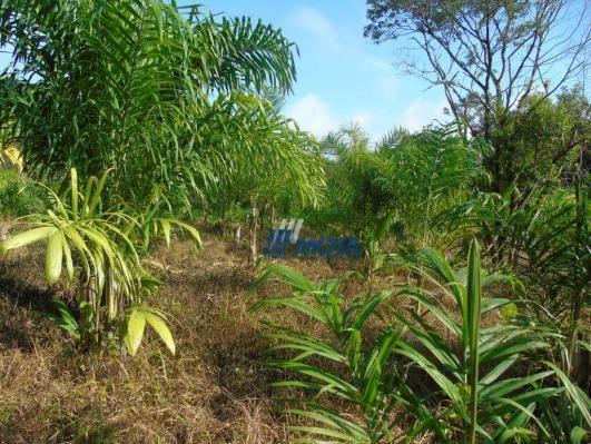 Fazenda antonina - Foto 2