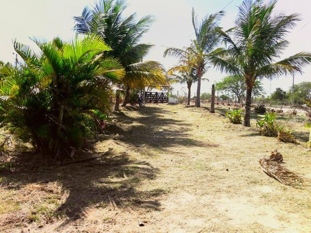 Sitio na Vila de Peladas em Caruaru - Foto 6
