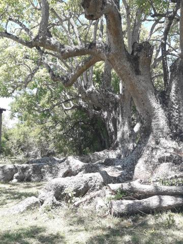 Chácara no 2 distrito de Piratini - Foto 3