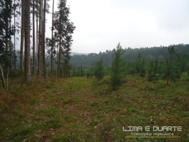 Chácara à venda em Bituvinha, Mafra cod:216CH - Foto 9