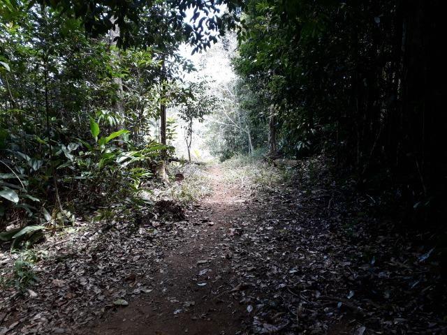 Sítio em Itacaré - Bahia - Foto 4