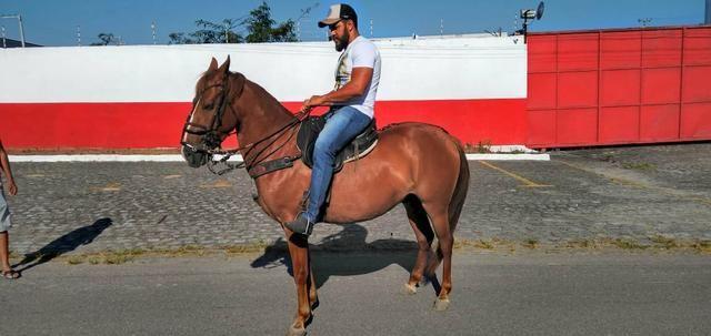 Cavalo Lazão Baixeiro. - Foto 3